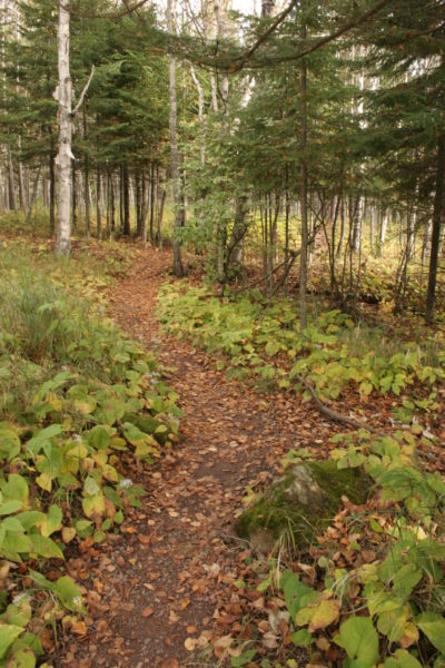 Discover your Native Plant Community @ Sugarloaf Cove Nature Center   Schroeder   Minnesota   United States