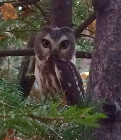 Fall Migration Magic @ Sugarloaf Cove Nature Center | Schroeder | Minnesota | United States